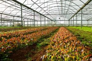 Azienda Agricola Amico Bio (4)