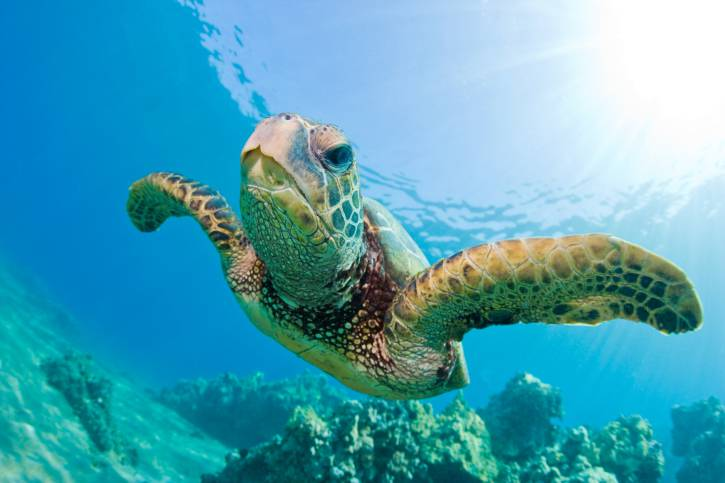 A portici il pi grande centro per tartarughe del for Vasche per tartarughe marine