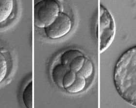 embrioni-knuc-u11003884713863wcf-1024x576lastampa-it