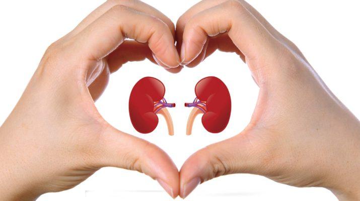 kidney-715x400