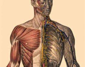 neuromuscular-disease
