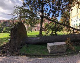 foto_alberi_caduti