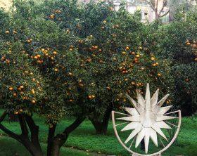 albero-con-mandarini