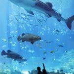 atlanta-aquarium_credit_atl-cvb