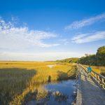Beach Creek - Cumberland Island