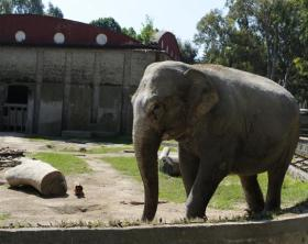 zoo di napoli