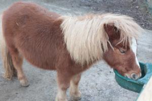 Pony nella spazio Grande Fattoria