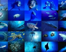 oceano,-delfino,-medusa,-pescecane,-collage-159976