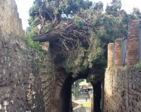 Pompei, maltempo fa cadere due alberi