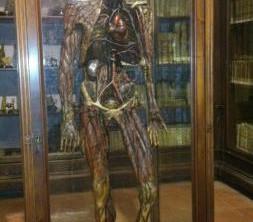 museo-anatomico-di-napoli