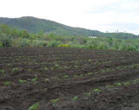 orto-del-vesuvio-terreno