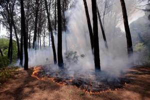 Incendio Vesuvio: vento alimenta roghi, elicotteri al lavoro