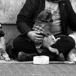 clochard-con-cani