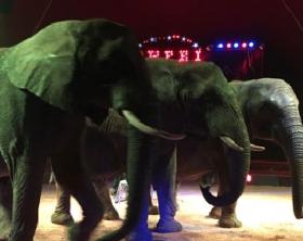 foto-elefanti-show