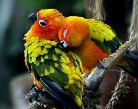 scegliere_pappagallino