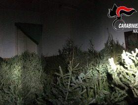 Gli alberi di Natale ritrovati dai carabinieri a quartieri Spagnoli