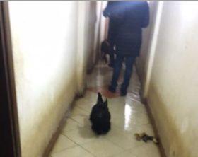 Abitazioni trasformate in zoo, sigilli Polizia Locale Napoli