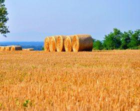 14231-psr-campania-2014-2020-primi-bandi-per-contributi-agli-agricoltori