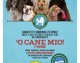 cs_o-cane-mio_fronte
