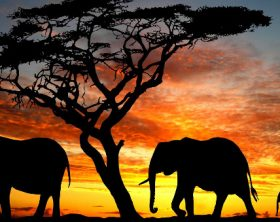 sud_africa1