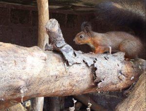 scoiattoli-2