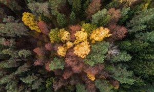 DRONE PHOTOGRAPHS OF AUTUMN, LITHUANIA, 24 OCT 2015