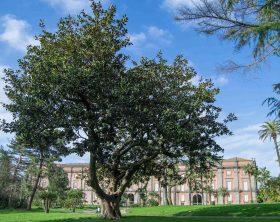 magnolia-foto-alessio-cuccaro