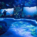 national-geographic-encounter-night-coral-reef-credit-national-geographic-encounter-ocean-odyssey