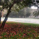 real-bosco-di-capodimonte_giardino_principi