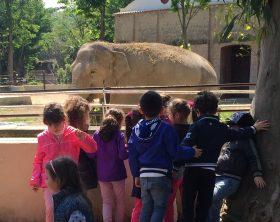 bambini-guardano-elefante