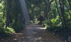 foto-un-real-bosco-per-tutti-social