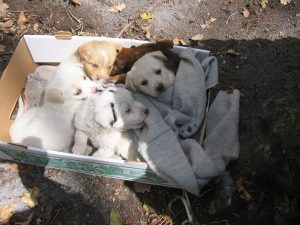 cuccioli-abbandonati-strada