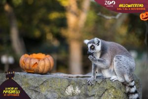 zoo-di-napoli-halloween