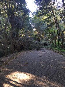 alberi_caduti3