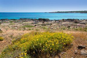 spiaggia-di-menorca-son-saura-in-ciutadella-turchese-balearic_79295-7560