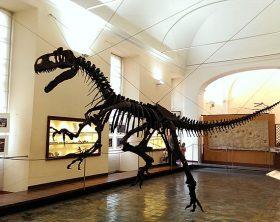 museo_di_paleontologia_napoli_allosauro