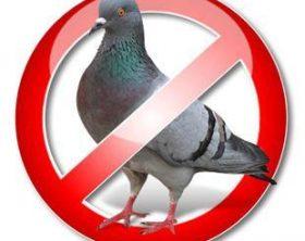 bird-control-allontanamento-volatili