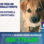 numero-verde-per-il-pronto-intervento-veterinario-regione-campania