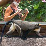 zoo-di-napoli-foto-di-matteo-bellia