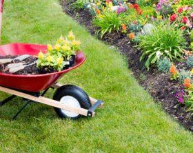 manutenzione-del-giardino