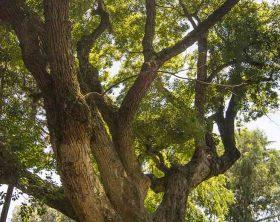 bosco-canforo-foto-alessio-cuccaro