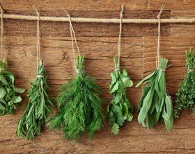 piante-aromatiche-come-rimedi-naturali-contro-gli-insetti