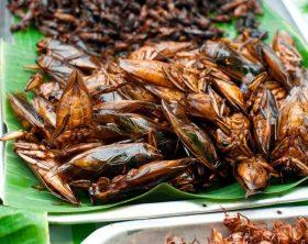 insetti-commestibili-elenco
